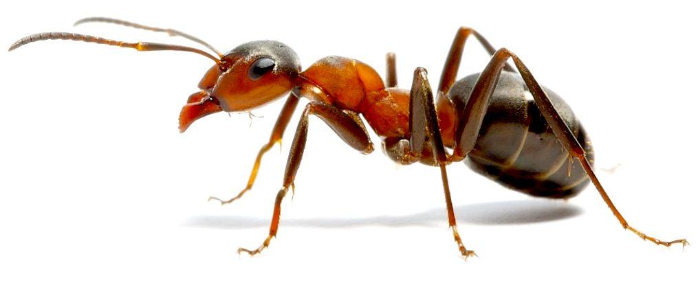 GIANT PREHISTORIC ANT MOVIE IDEA SCIFI DINOSAUR FILMS