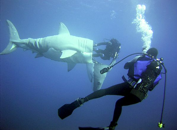 SHARKS ANIMATRONICS MARINE ROBOTS SUBMARINE FISH TOYS ...