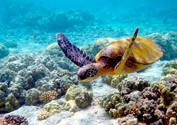 oceanography hawaii pacific ocean solar boat race splash rash move