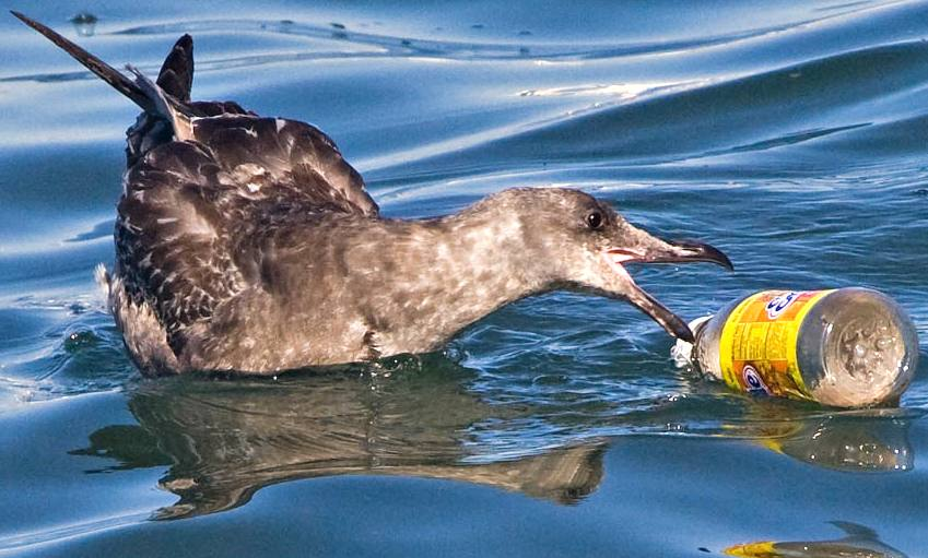 effects of plastic and the great Microplastics increasingly being detected and quantified in aquatic environments  microplastics in the great  effects and fate of small plastic debris.