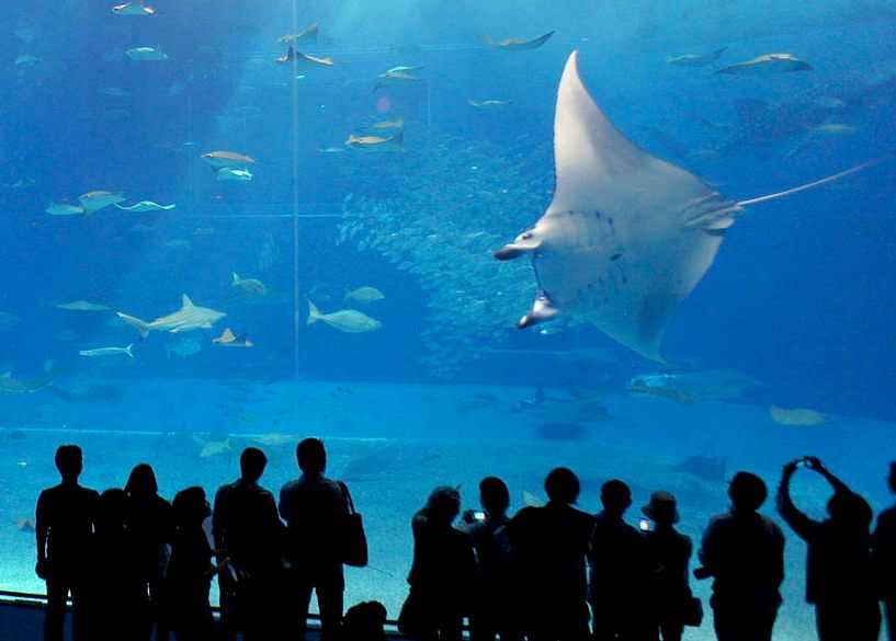 Manta And Sting Rays Animatronics Marine Robots Fish Mantarays