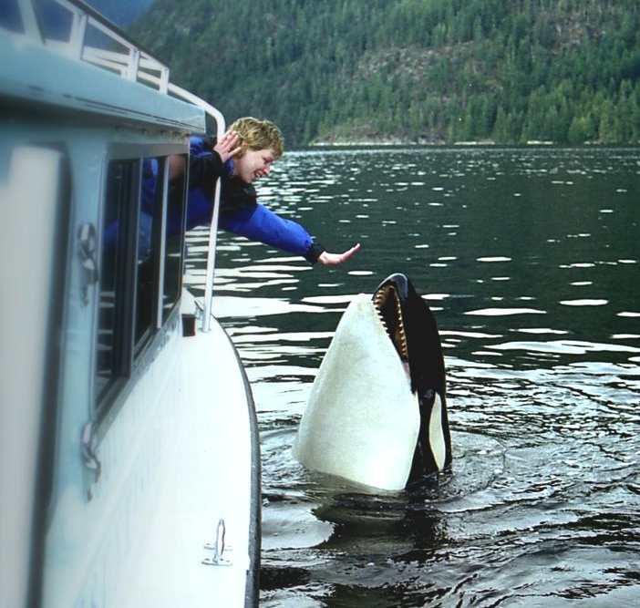 LUNA ORCAS KILLER WHALES TRUE STORY DOCUMENTARY FILM SCARLETT JOHANSSON