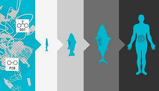 an introduction to the threats to our ocean fisheries Introduction to the special issue: the global state of the ocean interactions  of  ongoing depletions of fish stocks, the degradation of food webs, threats to.