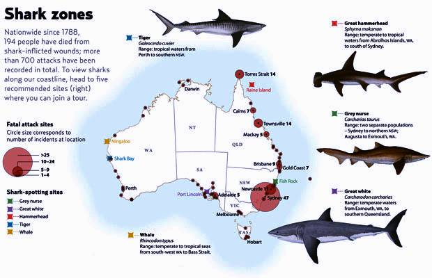 every year around 75 attacks are reported worldwide despite their relative rarity many people fear shark attacks after occasional serial attacks